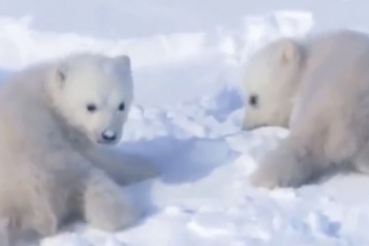 """Report del Wwf """"Ghiaccio bollente"""", allarme riscaldamento globale - VIDEO"""