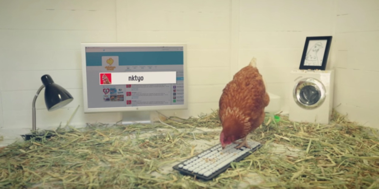 Betty, il pollo che twitta