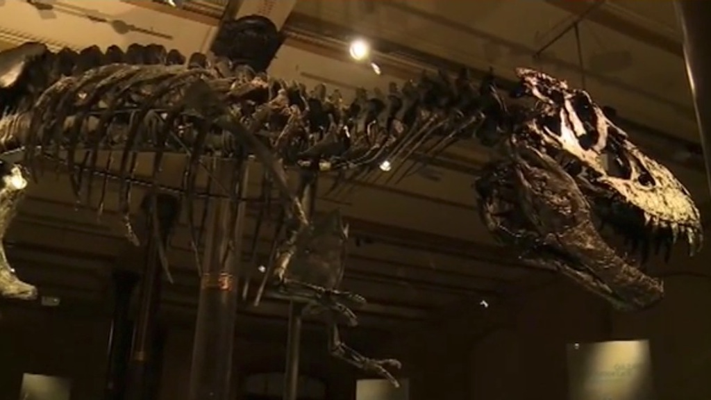 Tristan, in mostra a Berlino il gigantesco T. Rex - VIDEO