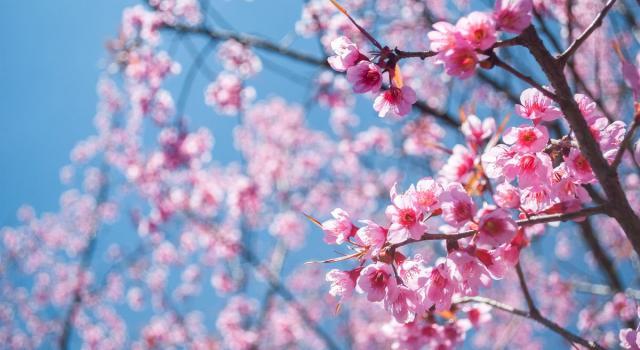 Sapevi che la Primavera quest'anno inizia il 20 (e non il 21) marzo? Alla scoperta dell'equinozio!