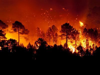 Sicilia, vasto incendio a Altofonte: centinaia di abitanti evacuati