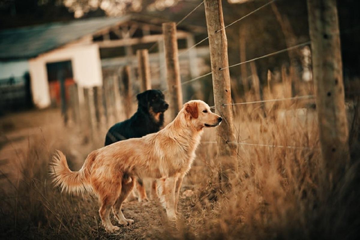 Come costruire un recinto per cani anti-fuga?