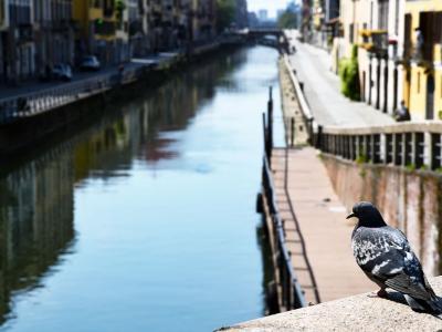 Milano, venditore di rose aggredito e buttato in acqua nella Darsena