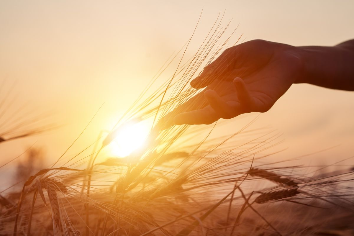 5 giugno, Giornata Mondiale dell'Ambiente: 2020 dedicato all
