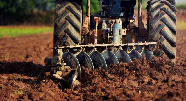 Invasione di cavallette in Sardegna, agricoltori in ginocchio
