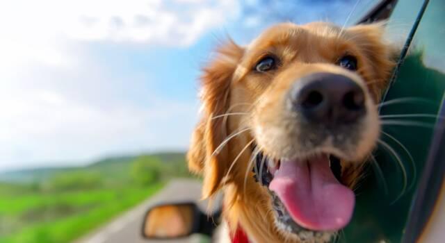 Trasportare animali in auto: come fare, la normativa e cosa bisogna sapere