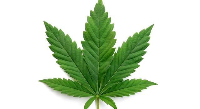 Referendum Cannabis, raggiunte le 500mila firme
